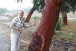 Посещаю плантацию пробковых дубов в Португалии