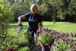 Сажаю ароматные травы