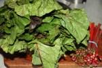 Мангольд или листья свеклы