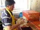 Так забивают халяльных кур на рынке в Куала-Лумпуре
