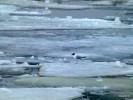 Порт Хельсинки, середина апреля 2013 г. Холодно даже чайкам