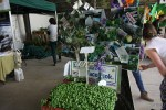 На фестивале продают семена и рассаду из хозяйства Баллималое