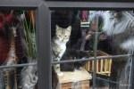 Окно частного дома в Корке. Мы с кошкой заинтересовали друг друга