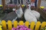 На праздник Еды в парке Горького привезли живых цесарок