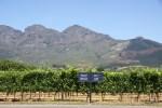 Виноградники во Франшхуке, ЮАР