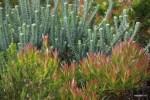 Финбош - это 9 тысяч растений. Мыс Доброй Надежды