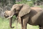 Слоны показались