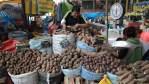 В картофельных рядах на рынке в Арекипе