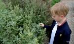 Мой младший внук Даня впервые увидел, как растет киноа