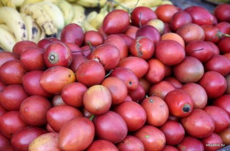 Эти фрукты в Панаме называют древесными помидорами