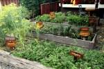 На огороде в финке Лерида растут европейские ароматные травы