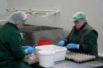 Разбили яйца - теперь чистят лук