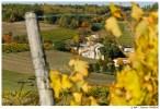 Зреет виноград в Коньяке