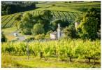 Виноградники в Коньяке самые большие по площади в мире