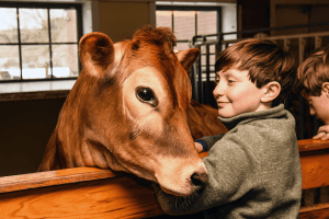 Image of boy with cow