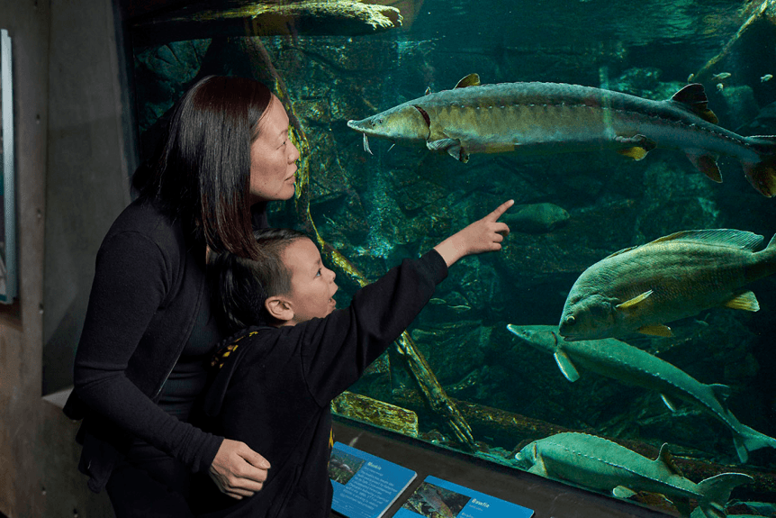 Image of a family looking at fish in a tank