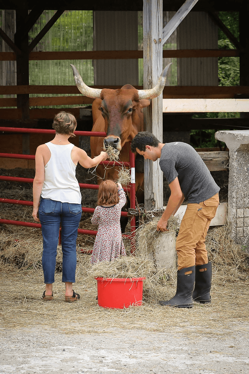 Image of family feeding hay to cow