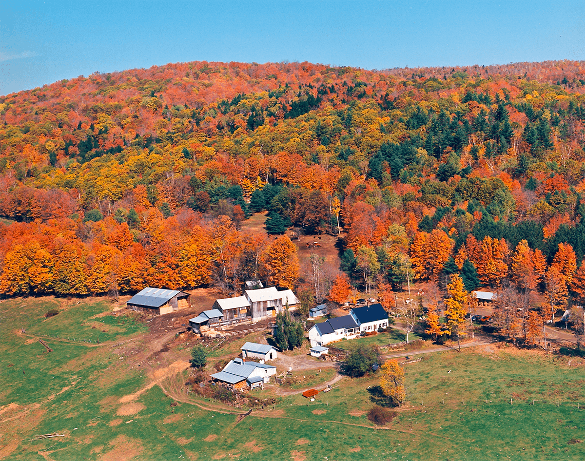 Aerial image of Sugarbush Farm and foliage