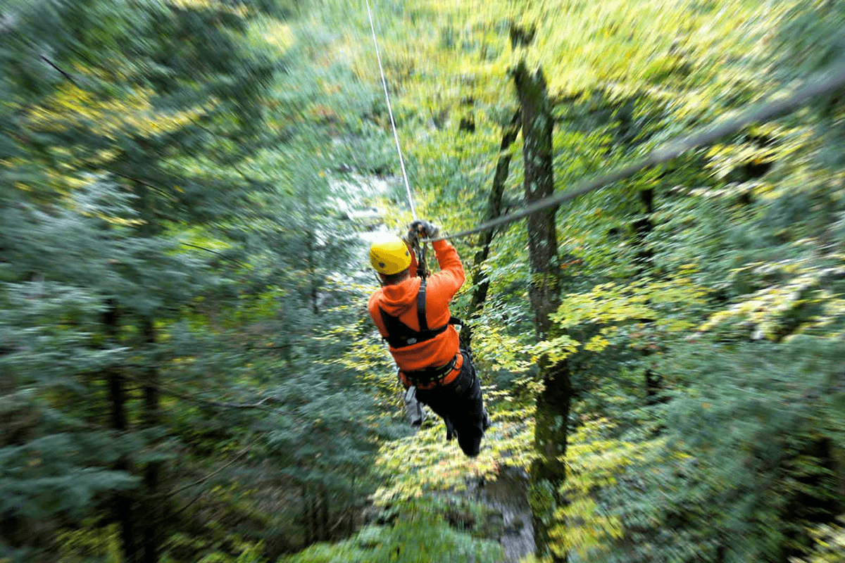 Image of person on zipline going down through the tree canopy at Arbotrek