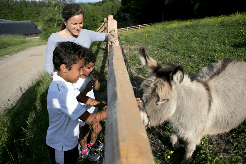 Image of kids petting a donkey at Shelburne Farms