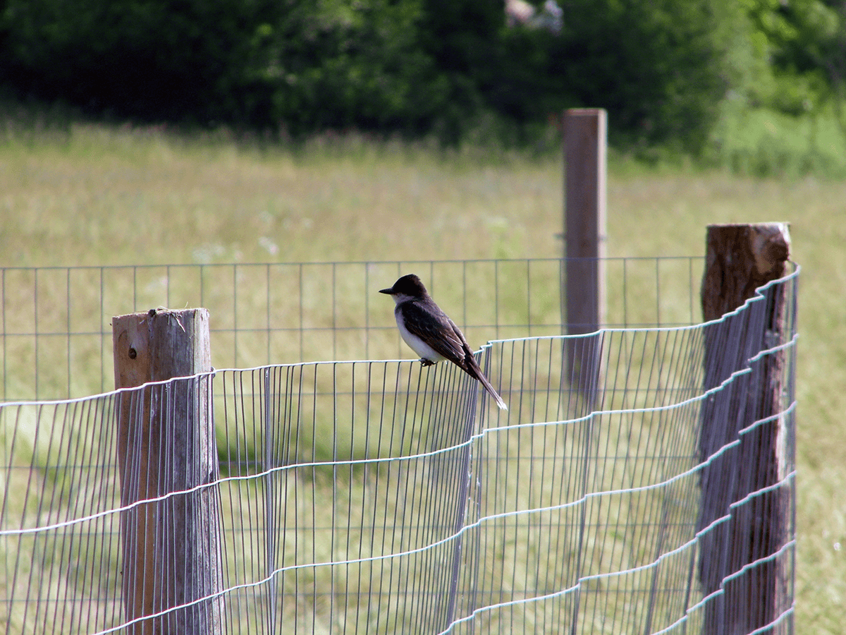 Image of bird sitting on a fence at Hildene, The Lincoln Family Home