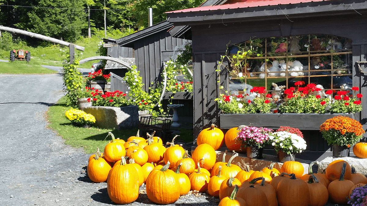 Image of pumpkins outside the store at Morse Farm Sugarworks