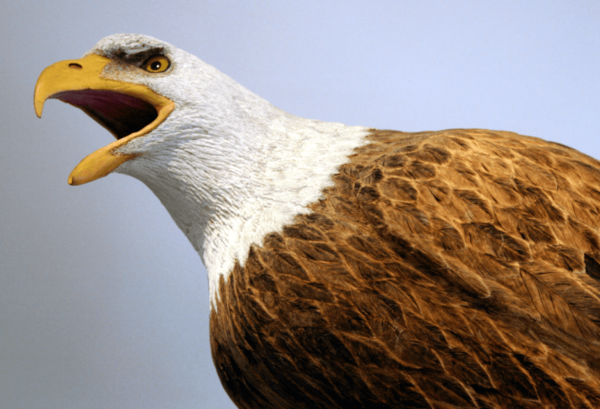 Image of Birds of Vermont Museum Bald Eagle carving