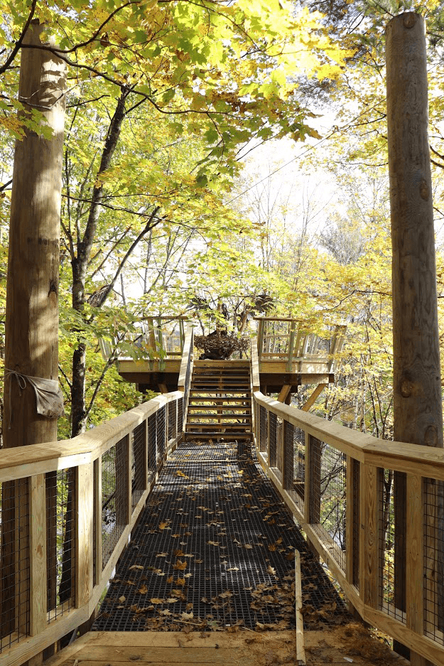 Image of canopy walk at VINS