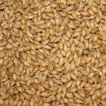 barley-malt2