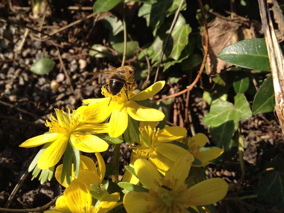 Voedselbanken voor Bijen!