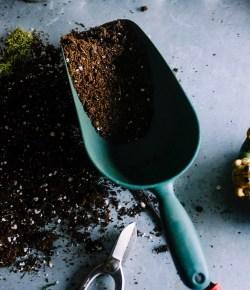 Compost en groenafval