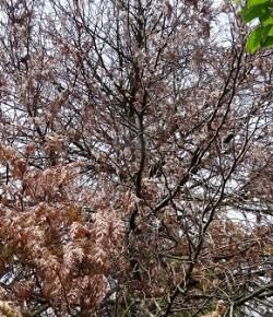 Bruine bomen