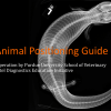VUE Exotic Animal Positioning Guide cover