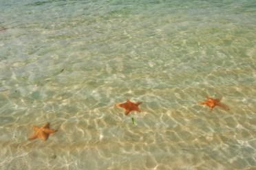 La Playa de las Estrellas en bocas del Toro - ©depositphotos.com/Studio549