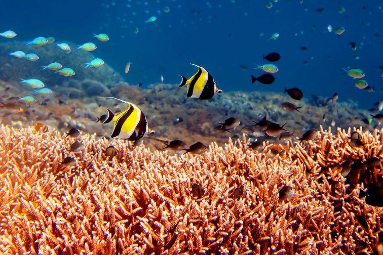 Islas Gili, Indonesia