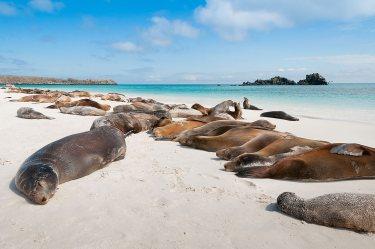 leones marinos. Galápagos