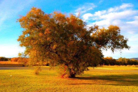 Imagen: Tablas de Daimiel, luz de otoño por Shemsu.Hor, (CC BY-SA 2.0)