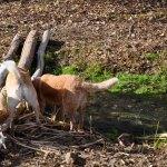 Laika, Mirri & Panga check out the bridge