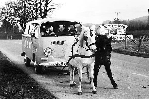VW_bus_horses