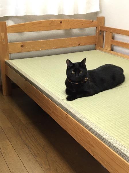 黒猫と畳ベッド