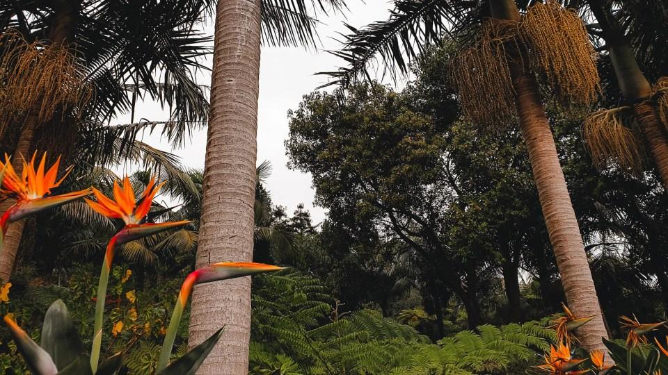botanische tuin madeira