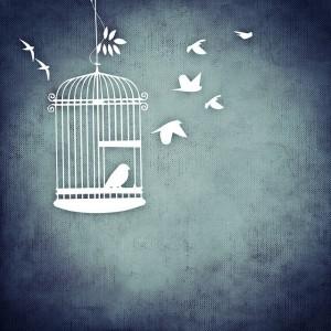 Vögel fliegen in die Freiheit