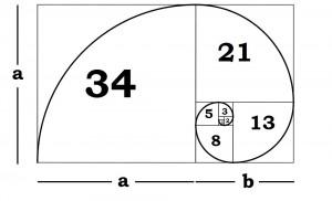 Die Fibonacci Spirale im goldenen Schnitt