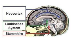 Die drei Zonen des Gehirns - Tote Informationen