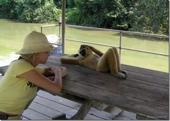Monkey Tries To Impress Girl - Funniest Monkey That is in Love With Girl