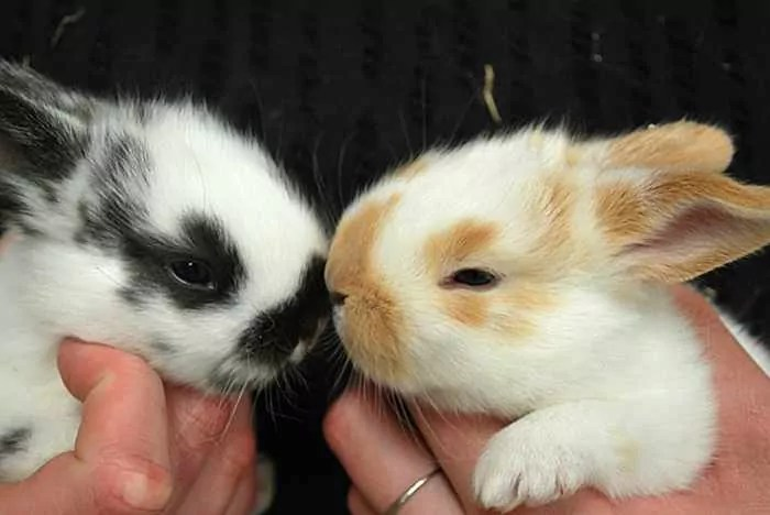 40 Animal Couples That Are So In Love -04