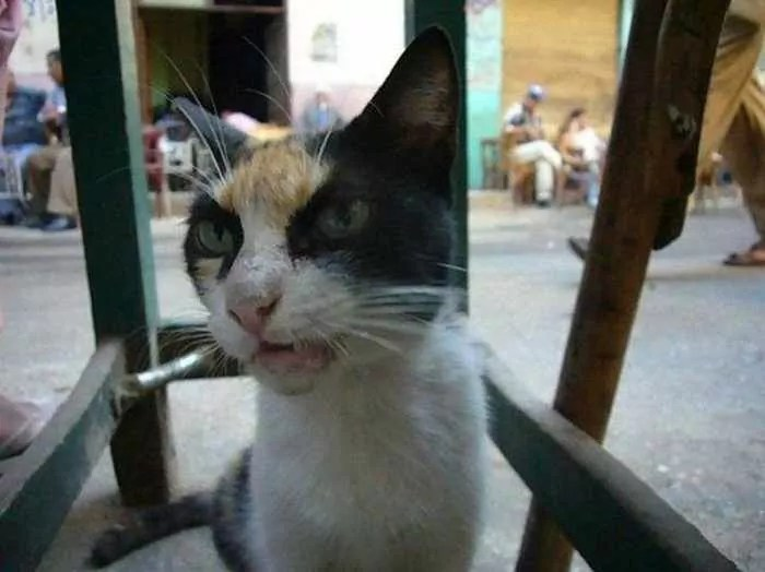 Crazy Cat Funny Pictures - 4 Photos -01