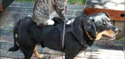 dogs-and-cats_11