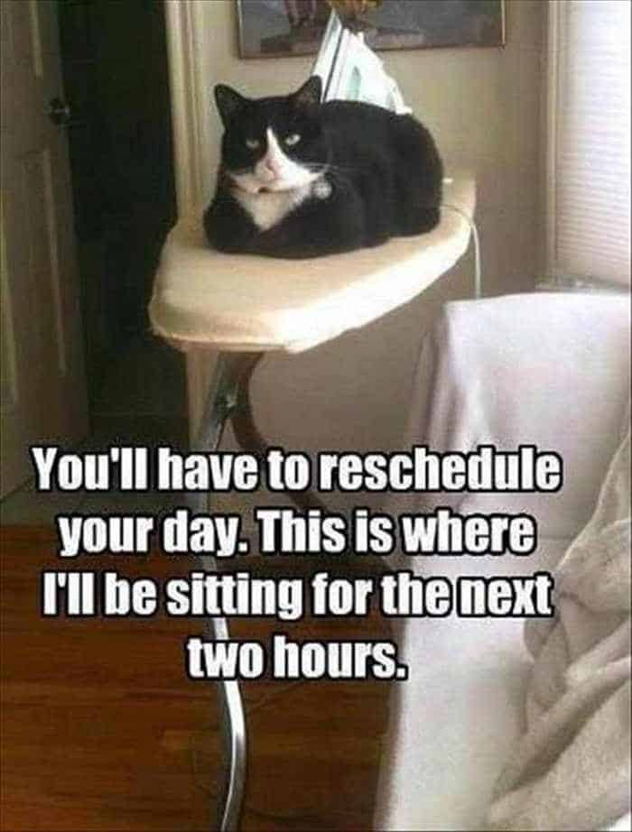 Funny Animal Picture Wackyy Picdump of the Day 2 - 22 Pics-11