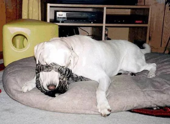 Top 10 Funny And Weird Images of Cat And Dog Love Each Other -06
